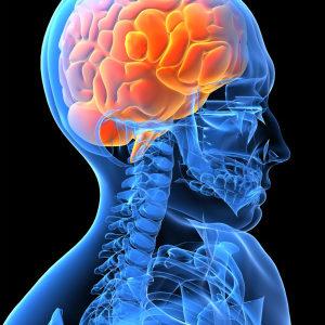 頭蓋骨・顔面骨はある程度の柔軟性が必要